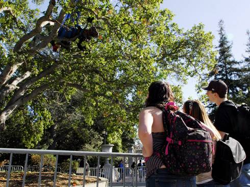 Photo: Freshman Emily Johnson and two students who wished not to be identified watch the tree sitter protesting outside of Wheeler Hall.
