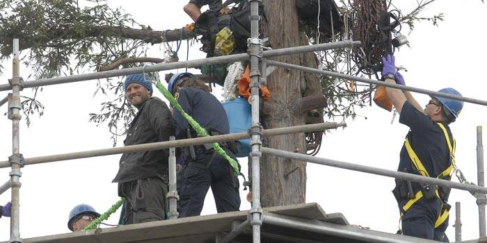 Photo: UC Berkeley-hired construction workers built a scaffold around the redwood tree that the last four protesters occupied until yesterday, when they decided to exit the oak grove.
