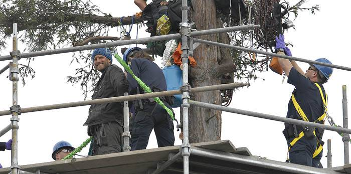 Photo: The last four tree-sitters descended from their posts on Tuesday after UC Berkeley constructed a scaffold around their redwood tree.