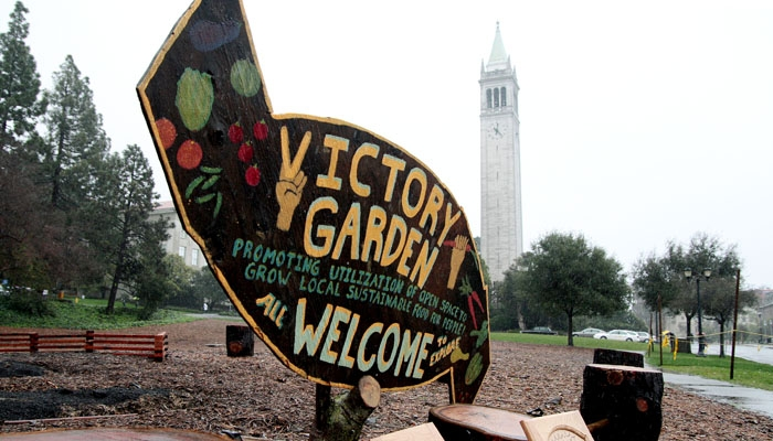 Photo: Memorial Victory Garden. which is currently being planted by UC Berkeley student groups and community members for an April harvest, is located in front of Evans Hall.