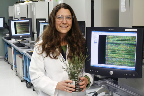 Photo: Susan Lucas, head of the sequencing department at the Joint Genome Institute, holds a tuft of Brachypodium distachyon, a simple type of grass. Researchers at the institute hope to create biofuels from a variety of grasses.