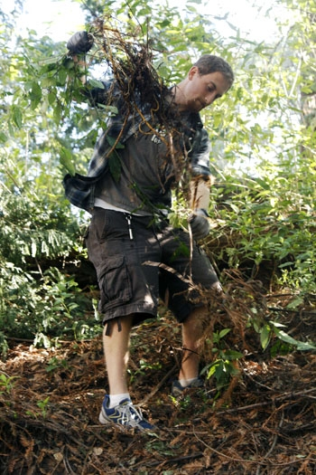 Photo: Tyler Grinberg removes invasive species from the banks of Strawberry Creek. The creek, which runs through the UC Berkeley campus, is in the midst of a major restoration project.