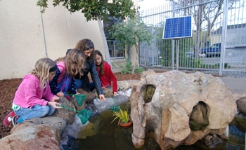 Photo: Sharon Danks, a Berkeley-area environmental planner, shows off a pond at Rosa Parks Elementary to children at the school. Danks and her firm have created green schoolyards that often include gardens and outdoor classroom spaces.