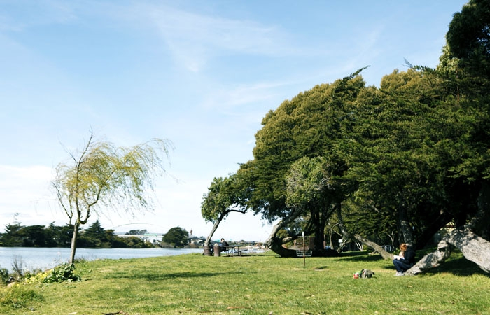 Photo: Residents are worried that pollution and traffic from potential redevelopment of large buildings around the Berkeley Aquatic Park will disrupt the park's natural habitats and lower its aesthetic value.