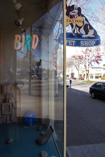 Photo: Lucky Dog Pet Store closed March 10 as the owner, Behrouze